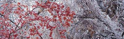 Photograph - Icy Red by Ian  MacDonald