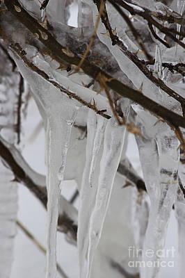 Photograph - Icy Rosebush by JT Lewis