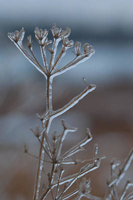 Photograph - Icy Shapes And Lines by Cascade Colors