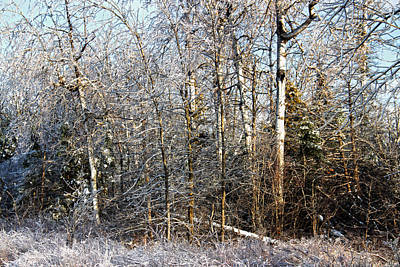 Photograph - Icy Tree Line by Jim Vance