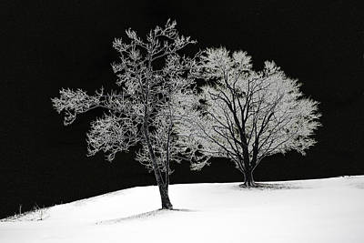 Icy Trees Art Print by Wendell Thompson