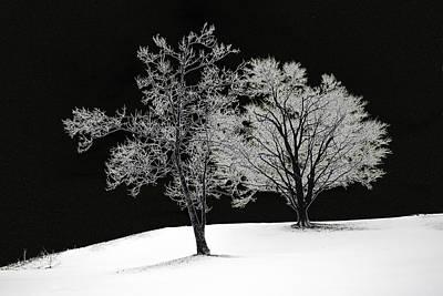Icy Trees Art Print