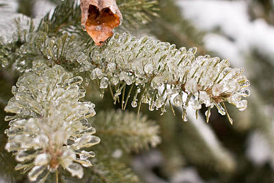 Photograph - Icy Winter Wonderland by Barbara West