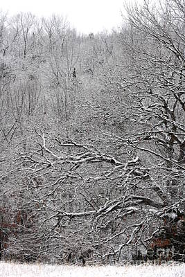 Photograph - Icy Woodland by Fred Sheridan