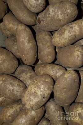 Spuds Photograph - Idaho Russet Potatoes by William H. Mullins