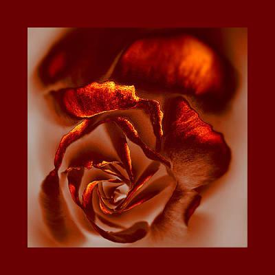 If A Rose Is A Rose Print by Li   van Saathoff