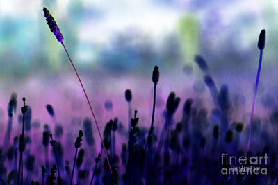 Photograph - If I Had A Purple Crayon ... by Chris Armytage