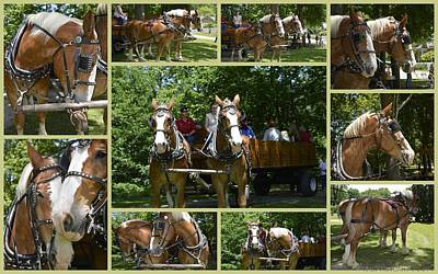 Hayride Photograph - If You Love Belgian Horses by Kathy Barney