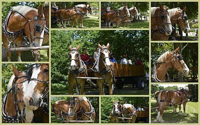 If You Love Belgian Horses Art Print by Kathy Barney