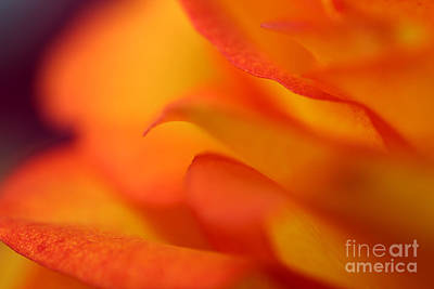 Photograph - Ignite by Stacey Zimmerman