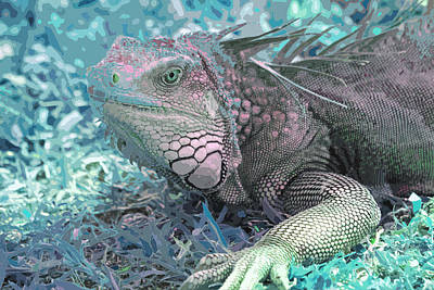Photograph - Iguana by Carol McCarty
