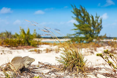 Photograph - Iguana Cay Inhabitants Gave It The Nickname by Jo Ann Snover