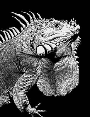 Reptile Skin Digital Art - Iguana Lizard by Daniel Hagerman