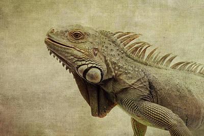 Iguana Print by Marina Kojukhova