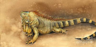 Iguana Art Print by Nan Wright