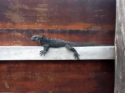 Iguana On Sign Print by Brian  Hanna