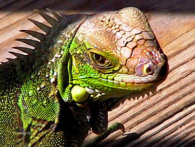 Photograph - Iguana On The Deck At Mammacitas by Duane McCullough