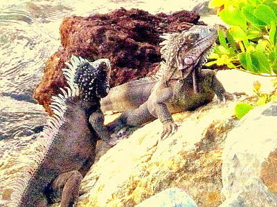 Photograph - Iguanas by John Potts