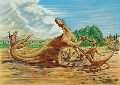 Belgium Photograph - Iguanodon Defending Itself by Deagostini/uig