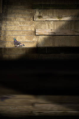 Pigeon Photograph - Il Piccolo Guardiano by Bob Orsillo