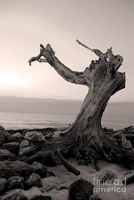Dead Tree Trunk Digital Art - I'll Find You by Glenda Wright