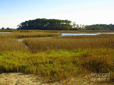 Photograph - I'll Sell You Some Swamp Land by Lew Davis