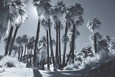 Infrared Photograph - Illuminate by Laurie Search