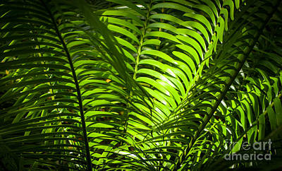 Illuminated Jungle Fern Art Print