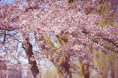 Photograph - Illuminated Tree. Pink Spring In Amsterdam by Jenny Rainbow