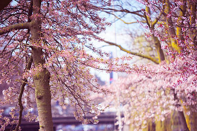 Photograph - Illuminated Trees. Pink Spring In Amsterdam by Jenny Rainbow