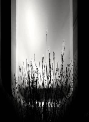 Photograph - Illumination by My Lens and Eye   - Judy Mullan -