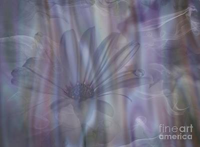 Photograph - Illusive Daisy by Shirley Mangini
