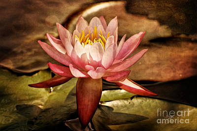 Waterlilies Digital Art - Illusory Lily by Lois Bryan