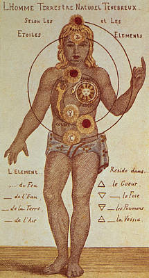 Energy Drawing - Illustration From Theosophica Practica, Showing The Seven Chakras, 19th Century by Indian School