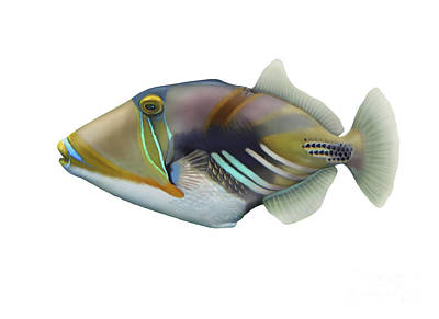 Triggerfish Digital Art - Illustration Of A Picasso Triggerfish by Carlyn Iverson