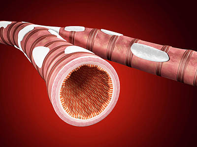 Airways Photograph - Illustration Of Bronchial Epithelium by Harvinder Singh