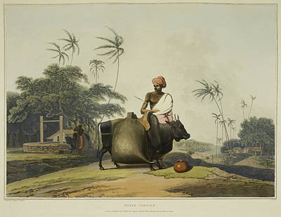 Categories Photograph - Illustration Of Man Loading An Oxen by British Library