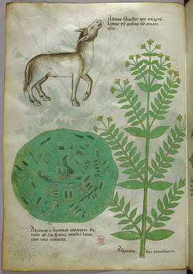 Illustration Of Plant With Horse Art Print by British Library