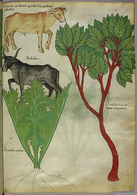 Illustration Of Plants And Bulls Art Print