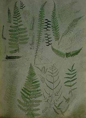 Photograph - Illustrations Of Fern Plants by Frances McLaughlin-Gill