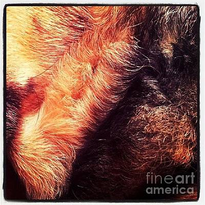 Dogs Wall Art - Photograph - #ilovemydog #dog #germanshepherddog by Abbie Shores
