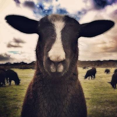 Sheep Photograph - I'm Baaaa'ck! #sheep #lamb by Robert Campbell