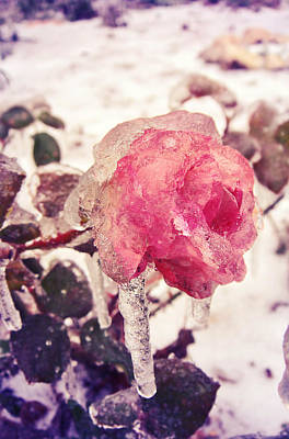 Fairy Hearts Pink Flower Photograph - I'm Frozen.. by Victoria  Kostova