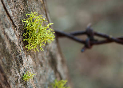 Photograph - I'm Lichen It by Michael Curry
