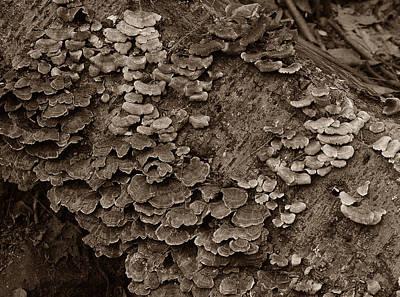 Photograph - Im Lichen It by Michael Kirk