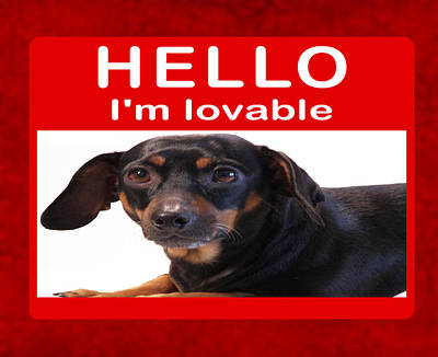 Dachshund Art Photograph - I'm Lovable by Daryl Macintyre