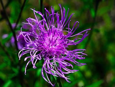 Wildflower Photograph - I'm Purple But I'm Not Barney by David Mortenson