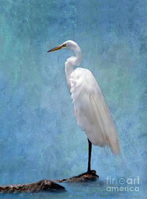Great White Egrets Digital Art - I'm So Pretty 2 by Betty LaRue