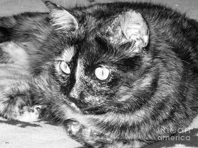 Photograph - Image Of Cat by Oksana Semenchenko