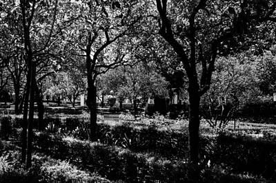 Nature Photograph - Imaginaerum by Andrea Mazzocchetti